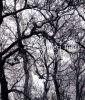 Santeri Tuori: Metsa Forest