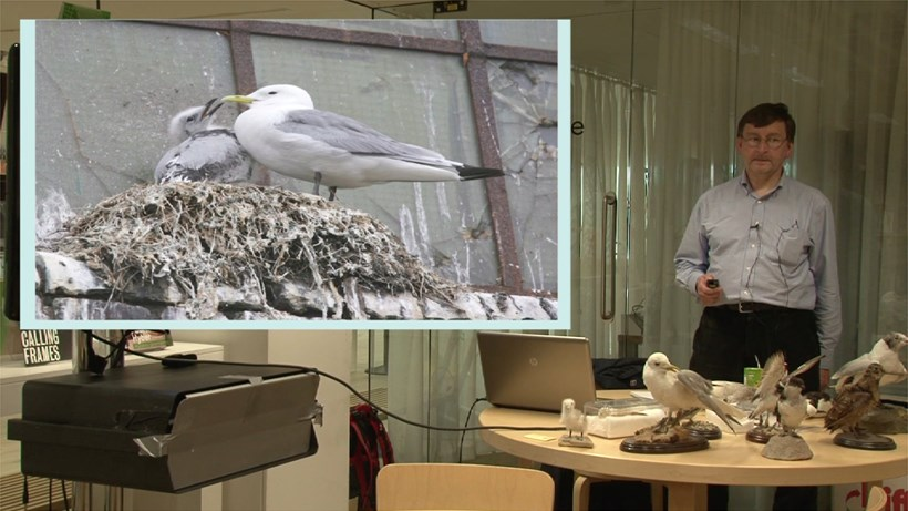 Kittiwakes on the Tyne: A Talk by Daniel M Turner