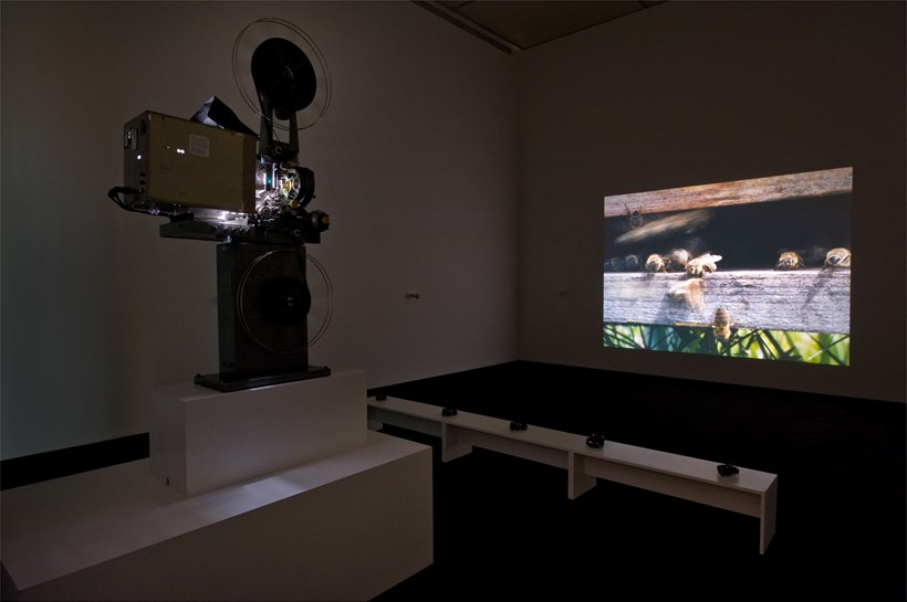 Marine Hugonnier: Apicula Enigma: Installation Image (02)