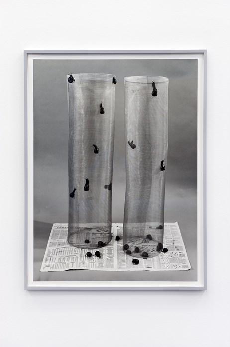 Hannah Collins: Climb, 1995