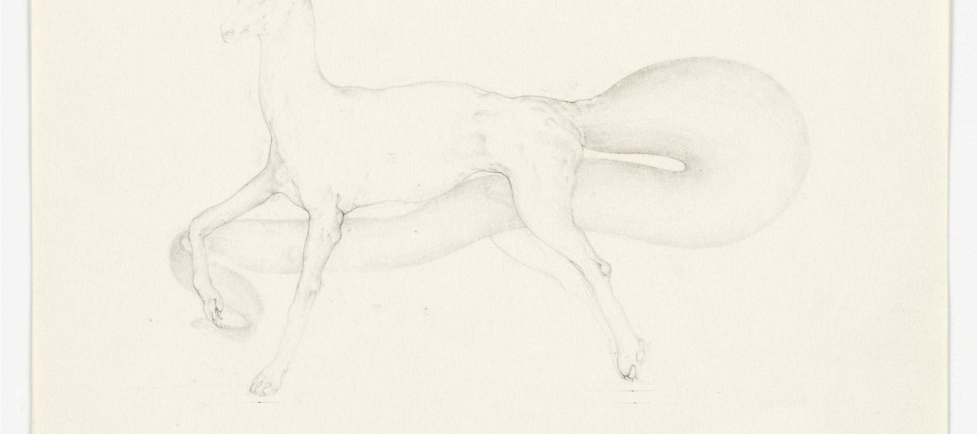 Christiana Soulou: Un animal reve par Kafka, 2013. © the artist, courtesy Sadie Coles HQ