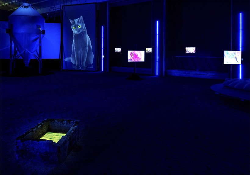 Heather Phillipson: The Age of Love: Installation view (03)