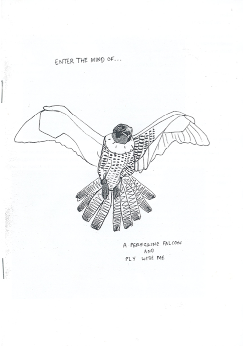 Enter the Mind of: A Peregrine Falcon and Fly With Me