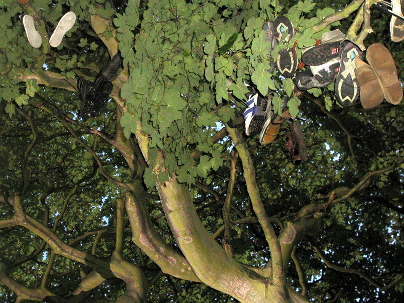 Mike Stubbs: Shoe Tree