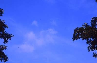 Alec Finlay: Participations: Wind Blown Cloud Archive: Slide (03)
